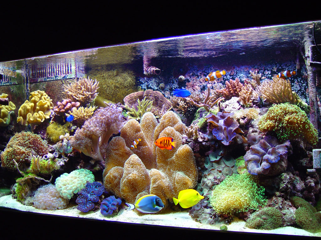 Why Water Changes Are Important For All Fish Only And Reef Marine Saltwater Aquariums Part 2 Naturalseawatersupplier